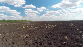 Flyg- sikt av det plogade fältet och trädet stock video