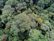 Flyg- sikt av djungelträd Koh Phangan Arkivbilder