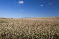 Flyg- sikt av en cornfield i bygden Royaltyfri Fotografi