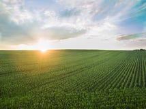 Flyg- sikt av en härlig solnedgång över fält för grön havre - jordbruks- fält Arkivbild
