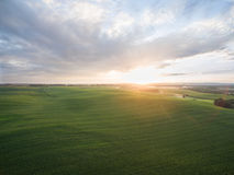Flyg- sikt av en härlig solnedgång över fält för grön havre - jordbruks- fält Arkivfoton