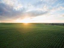 Flyg- sikt av en härlig solnedgång över fält för grön havre - jordbruks- fält Royaltyfria Foton