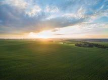 Flyg- sikt av en härlig solnedgång över fält för grön havre - jordbruks- fält Royaltyfria Bilder