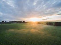 Flyg- sikt av en härlig solnedgång över fält för grön havre - jordbruks- fält Fotografering för Bildbyråer
