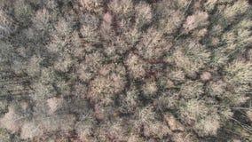 Flyg- sikt av en höstskoginflyttning vinden stock video