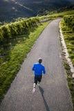 Flyg- sikt av en jogger i vingårdar Arkivfoto
