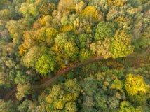 Flyg- sikt av en landsgränd på höstskogen royaltyfria bilder