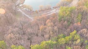 Flyg- sikt av en sjö i en pinjeskog med en sandig strand i tidig vår på soluppgång stock video