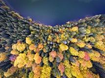 Flyg- sikt av en sjö och en skog i höst Arkivfoto