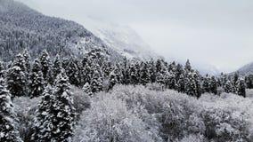 Flyg- sikt av en skog i en molnig dag för vinter Härlig vinternatur av granen och att sörja i snön Lågt flyg över lager videofilmer