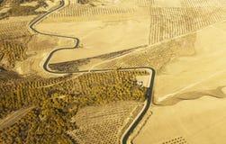 Flyg- sikt av en slingrig flod som omges av det gula vetefältet Royaltyfri Bild