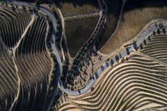 Flyg- sikt av en slingrig väg längs vingårdarna i kullarna av den douro dalen arkivbild