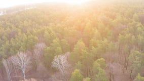 Flyg- sikt av enlövfällande skog i tidig vår på gryning stock video