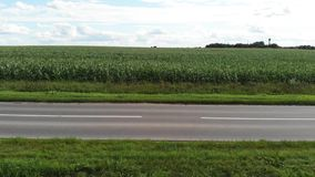 Flyg- sikt av ett f?lt f?r gr?n havre Tom asfaltväg för bil till och med havrefälten lager videofilmer