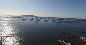 Flyg- sikt av ett ostronfält i söderna av Frankrike stock video
