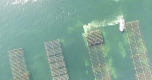 Flyg- sikt av ett ostronfält i söderna av Frankrike lager videofilmer