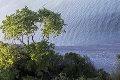 Flyg- sikt av ett träd på den härliga stranden i Katerini, Grekland Royaltyfri Bild