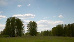 Flyg- sikt av fältet och skogen, moln, lantgård arkivfilmer