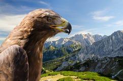 Flyg- sikt av fjällängberglandskapet med den guld- örnen Arkivfoto