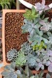 Flyg- sikt av fyrkantiga Clay Pot av exotiska suckulenta växter Arkivbilder