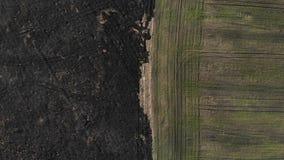 Flyg- sikt av gränsen av det brända och sådde fältet Den bästa sikten med klättrar upp teknik stock video