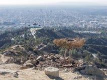 Flyg- sikt av Griffith Observatory och Los Angeles i stadens centrum intelligens Arkivbilder