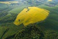 Flyg- sikt av gula fält Arkivfoton