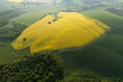 Flyg- sikt av gula fält Arkivfoto