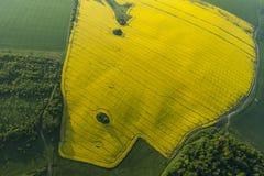 Flyg- sikt av gula fält Royaltyfri Foto