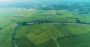 Flyg- sikt av härliga fält med floden i Chiang Rai område stock video