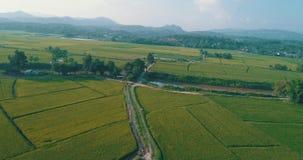 Flyg- sikt av härliga fält med floden i Chiang Rai område lager videofilmer
