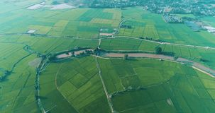 Flyg- sikt av härliga fält med floden i Chiang Rai område arkivfilmer