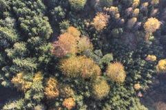 Flyg- sikt av höstskogen Royaltyfri Fotografi