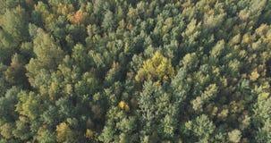 Flyg- sikt av höstträd i skog i september Arkivbild