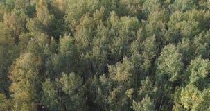 Flyg- sikt av höstträd i skog i september Royaltyfri Fotografi