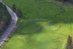 Flyg- sikt av Longhornnötkreatur royaltyfria foton