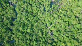 Flyg- sikt av mangroven Forest Top View av PA Phru Tha Pom Khlong Song Nam Park i Krabi, Thailand arkivfilmer