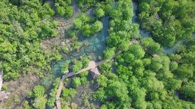 Flyg- sikt av mangroven Forest Top View av PA Phru Tha Pom Khlong Song Nam Park i Krabi, Thailand lager videofilmer