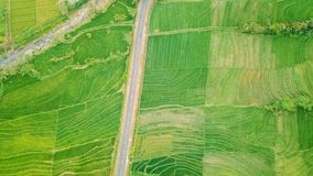 Flyg- sikt av Paddy Field i South East Asia arkivbilder