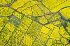 Flyg- sikt av rapsfröblomman som blommar i jordbruksmark royaltyfri bild