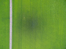 Flyg- sikt av ris, jordbruks- landskap för fält av Asien thail Arkivbilder