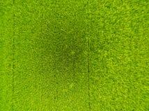 Flyg- sikt av ris, jordbruks- landskap för fält av Asien thail Royaltyfri Foto
