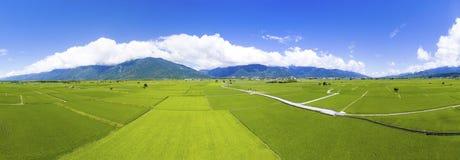 Flyg- sikt av risfältdalen taiwan fotografering för bildbyråer
