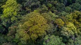 Flyg- sikt av sikten för för skogträd och väg uppifrån Arkivfoto