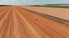 Flyg- sikt av skördvete eller rågfältet med baler för stookhösugrör Video för antenn 4k för åkerbruk lantgård för skörd lantlig arkivfilmer