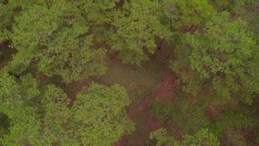 Flyg- sikt av skogDa-laten i Vietnam arkivfilmer