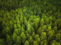 Flyg- sikt av skogen royaltyfria foton