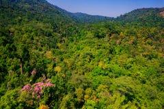 Flyg- sikt av skogen Royaltyfria Bilder