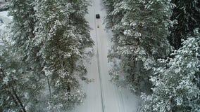 Flyg- sikt av skogen för bilinflyttningvinter stock video