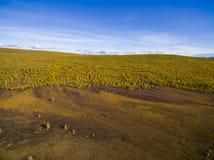 Flyg- sikt av skogen i Faret East, Ryssland fotografering för bildbyråer